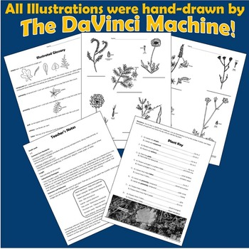 Can You Name That Wildflower?: A Life Science Activity Grades 6-8
