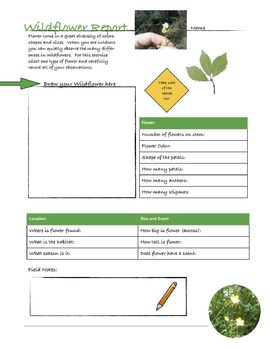 Wildflower Lab Report