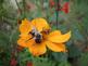 Photos from a Garden