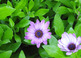 Stock Photos Flowers