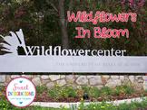 Texas Wildflowers - Slideshow and photographs