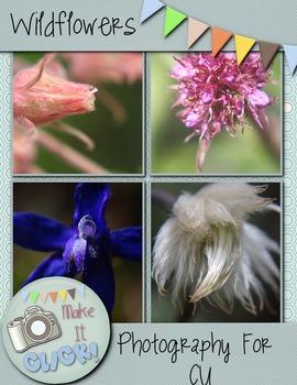 Wildflowers Summer Mountain Variety