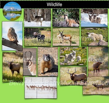 Wildlife in the West Images