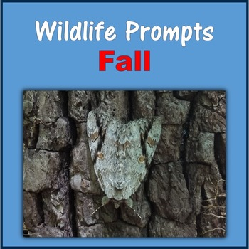 Wildlife Prompts (Fall)