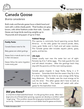 Wildlife Research Page Canada Goose