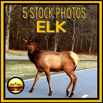 Wildlife Stock Photos of ELK Set Three