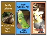 Wildlife Valentine Birds