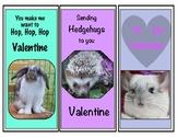 Wildlife Valentine Mammals