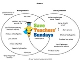 Wind pollination and insect pollination Lesson plan and Worksheets (Venn diagram