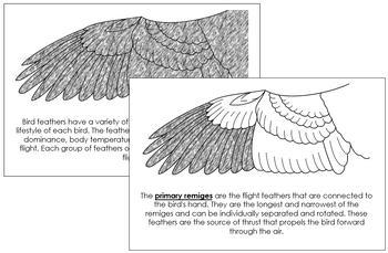 Wing Nomenclature Book