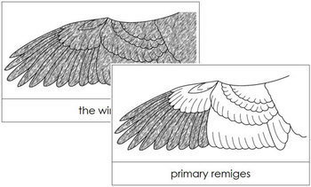 Wing Nomenclature Cards