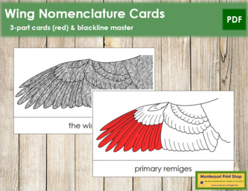 Wing Nomenclature Cards (Red)