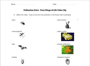 Pollination Video Clip (Wings of Life) - Matching Pollinators