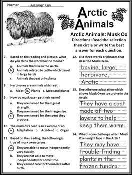 Winter Activities: Arctic Animals Winter Winter Activity Packet