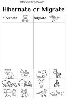 Winter Animal Activities for Preschoolers & Kindergarten