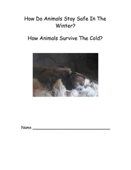 Winter Animal Adaptations