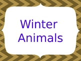 Winter Animal Adaptations, Migration, and Hibernation
