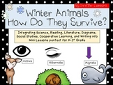 Winter Animal Hibernation Migration & Active for Kindergar