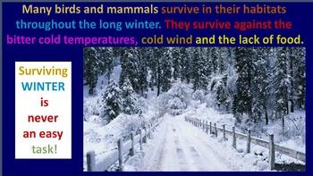 Winter Animals (ANIMATED)