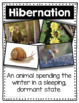 Winter Animals Who Hibernate or Migrate - Hibernation Vs. Migration