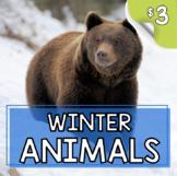 Winter Animals Who Hibernate or Migrate - Hibernation Migration