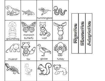 Winter Behavior in Animals Science Sorting