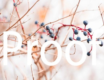 Winter Berries Clip Art and Stock Photos