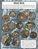 Winter Bird Observation - Northeast