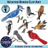 Winter Birds Clip Art