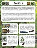 Winter Fun: Identifying Conifers