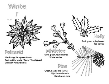 Winter Plants Coloring Page