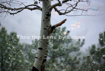 Winter Scene with Snowflakes Falling Stock Photo #138