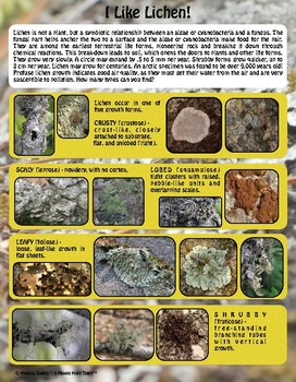 Winter and More Outdoors: Lichen Facts