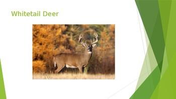 Wisconsin Animals PowerPoint