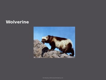 Wolverine - Animal - Power Point - Information Facts Pictures