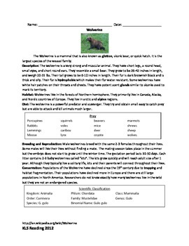 Wolverine - Review Article information facts -questions vocab word search