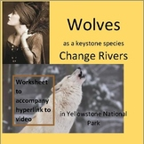 Wolves as a Keystone Species Change Rivers in Yellowstone