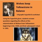 Ecosystems Wolves keep Yellowstone in Balance Infographic