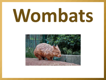 Wombats simple text reader