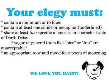 Wonder: an Elegy for Daisy