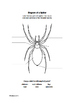 Wonders Grade 4 Unit 2 Anthology :Spiders