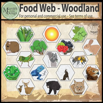Woodland Animal Food Web Clip Art {Messare Clips and Design}