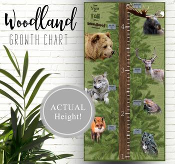 Woodland Animal Height Chart