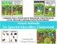 Woodland Creatures Forest Animals Adapted Book