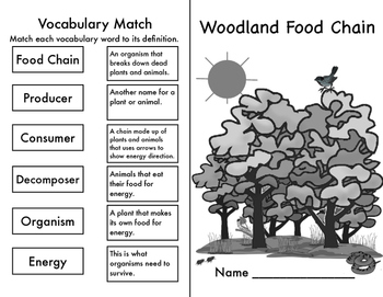Woodland Food Chain Diorama and Booklet