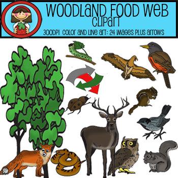 Woodland Food Web Clip Art Set - 24 images plus arrows for