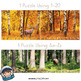 Woodland Puzzle Strips (Number and Letter Recognition with Real Photos)