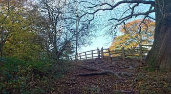 Woodland Walk Immersive Environment