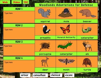 Woodland Animal Adaptations Interactive Digital Notebook for Google Drive®