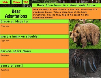 Woodland Animal Adaptations Interactive Notebook for Google® Distance Learning